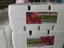 Seedless Grape Variety and Common Cultivation Type fresh black seeded grapes