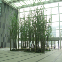 Beijing Palm high lifelike indoor decoration artificial bamboo tree
