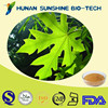 Solvent Extraction Leaf Part Used Paw paw Leaf Extract Powder