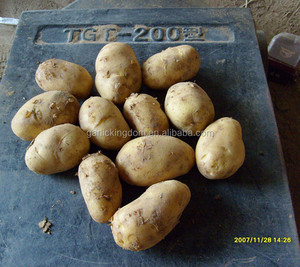 Chinese Fresh Potatoes 50-100g/fresh peeled potatoes/organic fresh potato