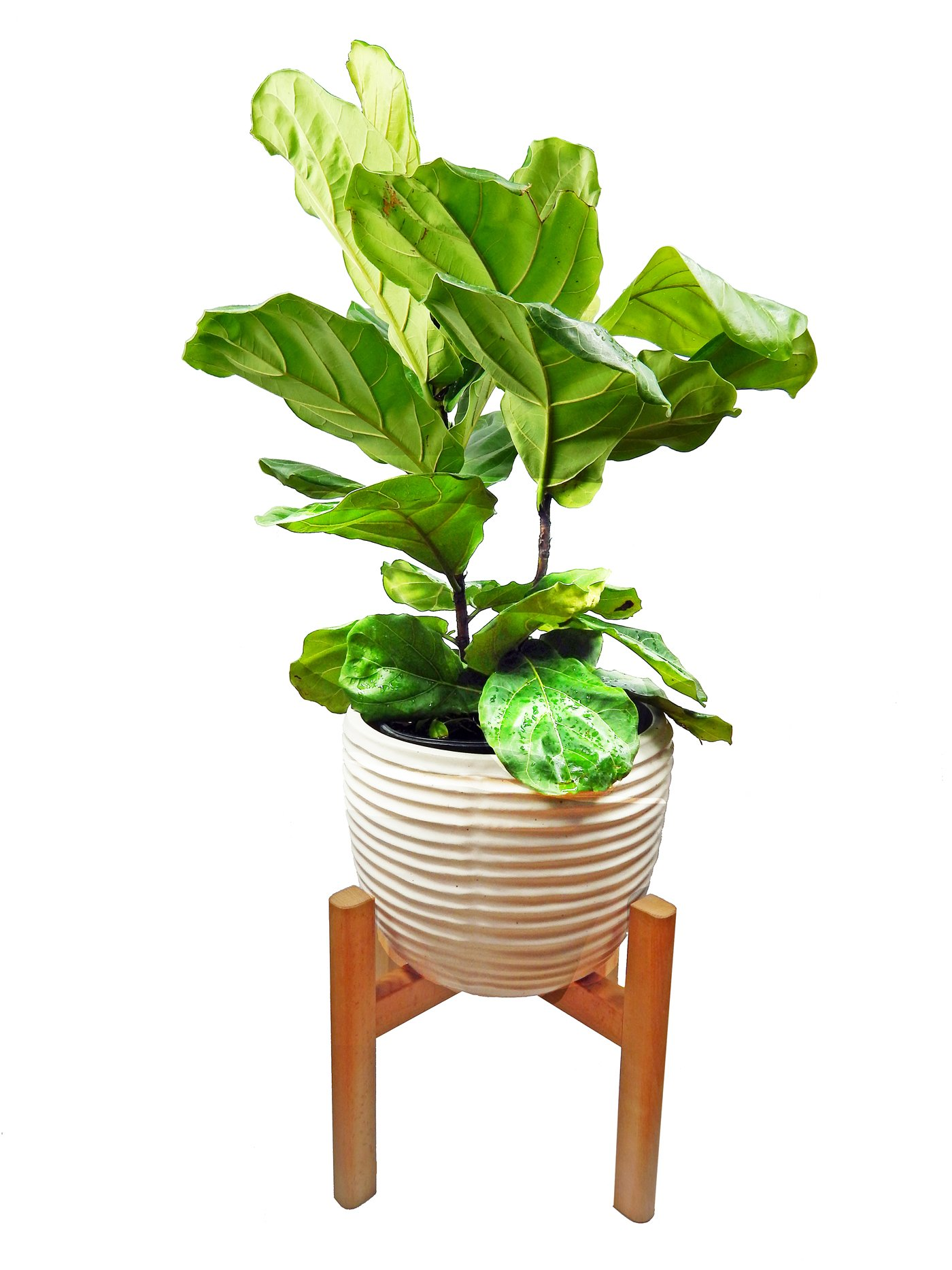 Cheap Multiple Plant Stand Find Multiple Plant Stand Deals On Line