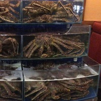 Dingfeng customized supermarket restaurant curved 3 layer chiller live king crab aquarium