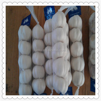 Fresh pure white garlic for garlic importer agriculture products