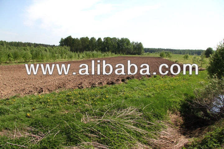 Agricultural Land In Tver,Russian Federation