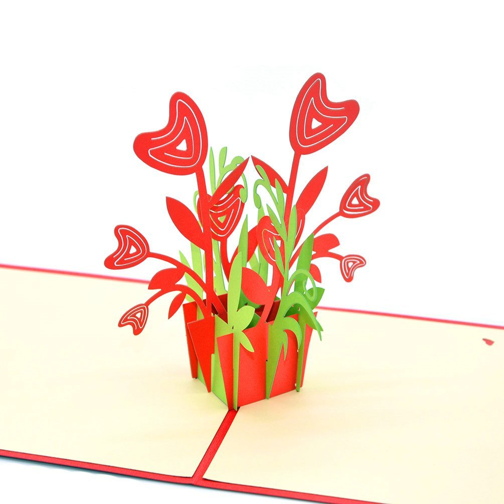 Buy Medigy 3d Pop Up Greeting Cards Blank Cards For Most Occastions