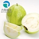 Factory Supply Pure Spray Drying Guava powder / Guava juice powder / Guava concentrate powder