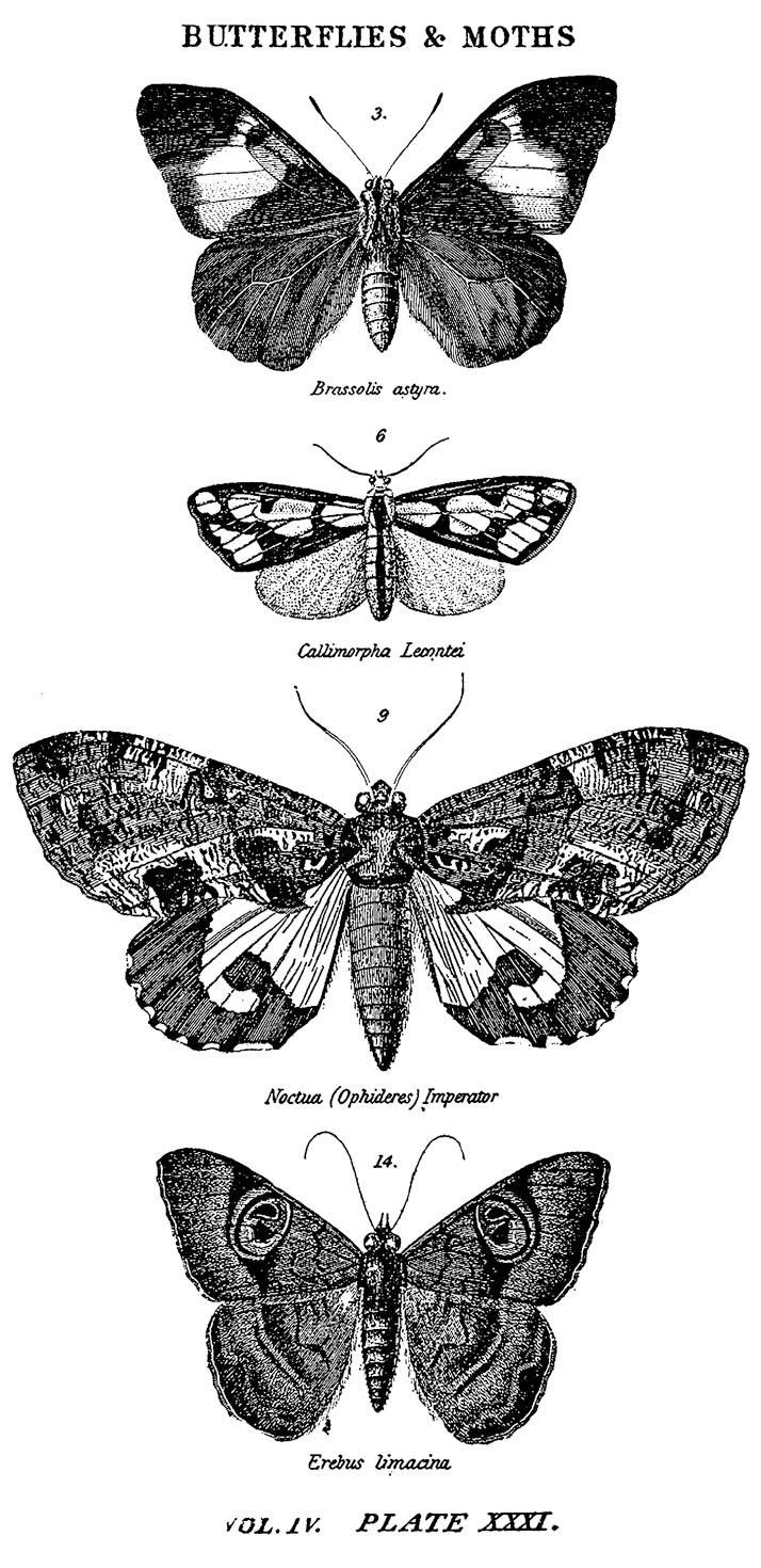 "Tim Holtz Mounted Red Rubber Stamp 2.5""X5"", Butterflies & Moths 1"