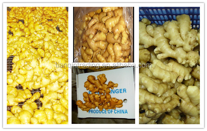 Chinese ginger new crop