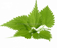 Bio Natural Nettle Root Extract