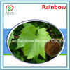 ephedra extract Brand new raw material grape leaf extract