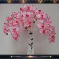 home decoration vanda orchids plants