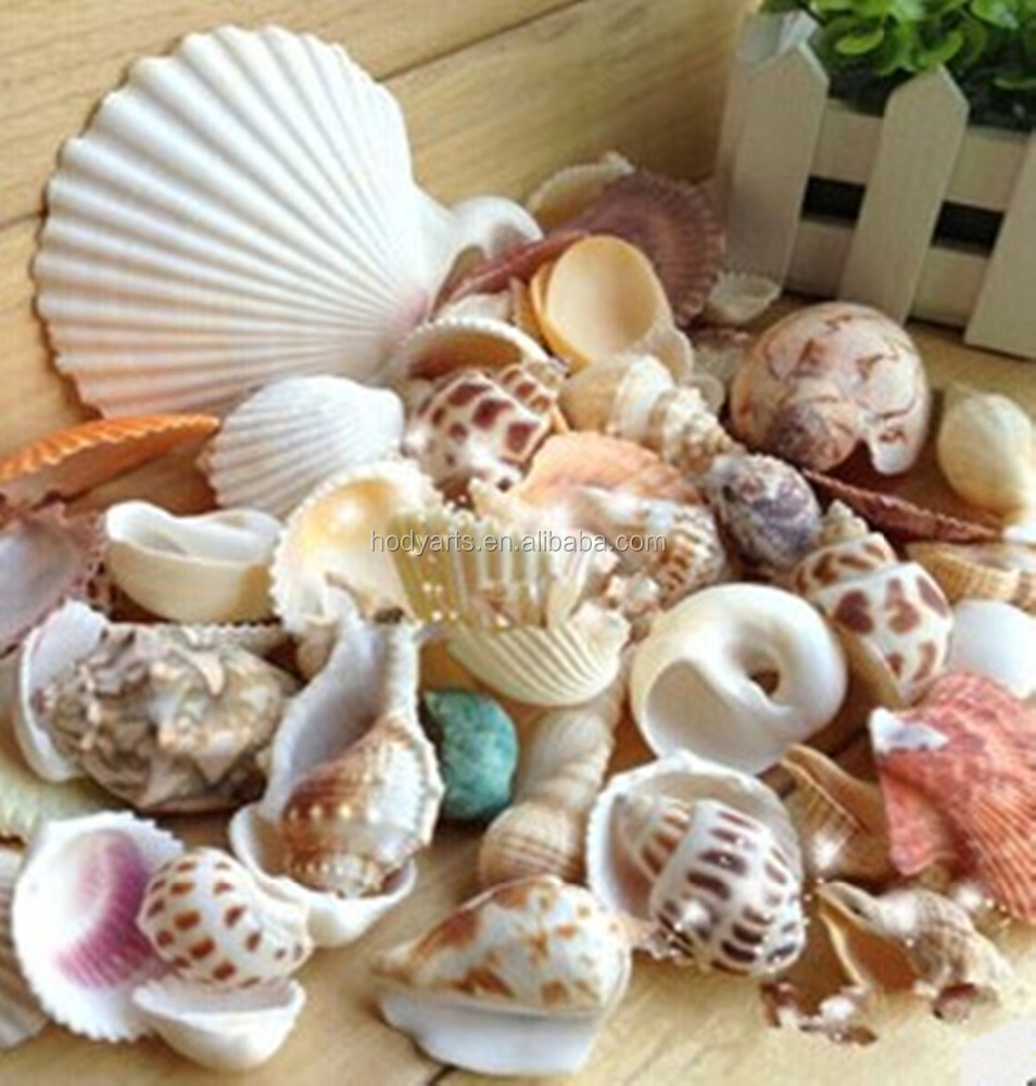 Wholesale natural Sea Shells
