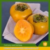 100% Natural and organic fresh persimmon sweet fruits from china