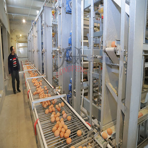 Best Design Easily Used Chicken Egg Poultry Farm Equipment for Sale