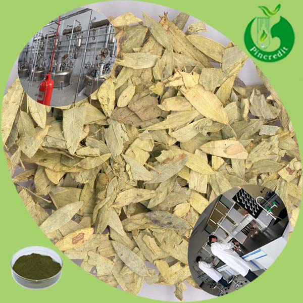 100% natural product for constipation senna leaf extract