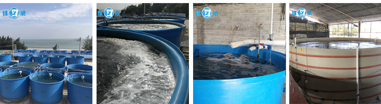 China Suppliers Best Fish Stock Farm Fish Tank