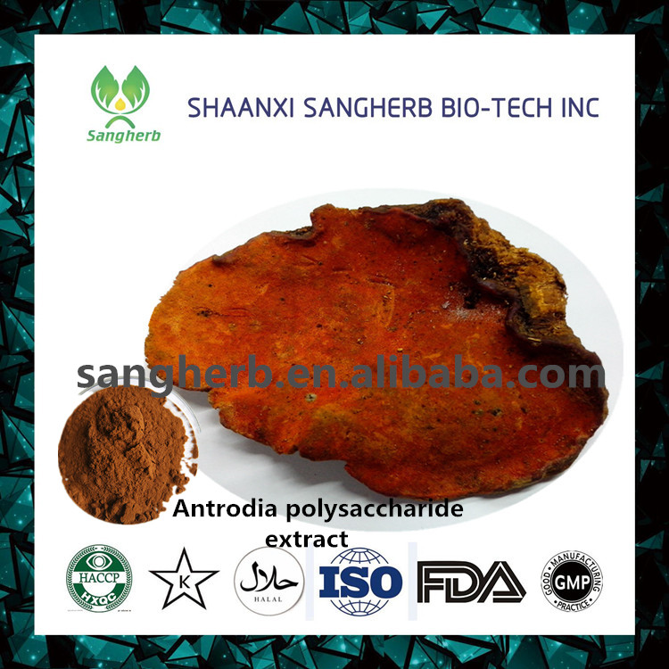 Top Quality Pure Natural Hot Sale Antrodia Camphorata Extract Powder Polysaccharides