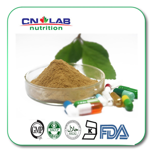 Organic Green tea extract, with active ingredients EGCG, L-theanine, Tea Polyphenol instant green tea extract powder