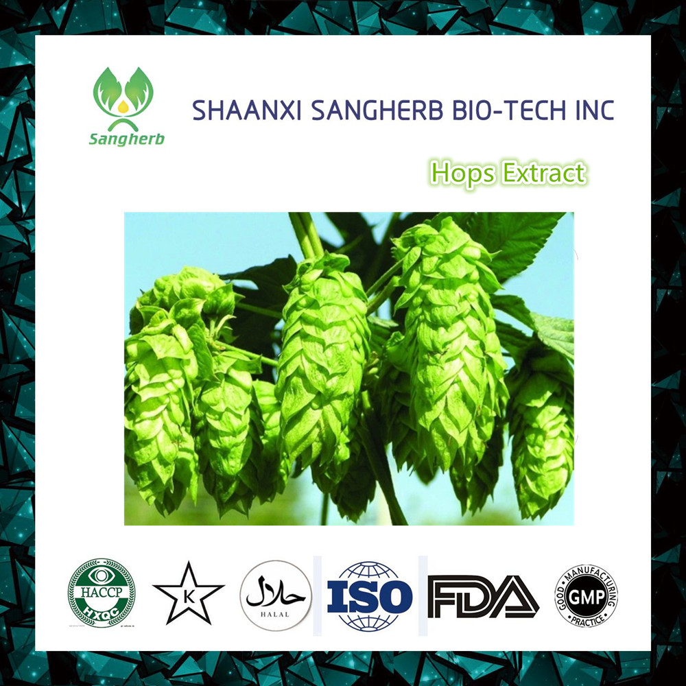 Direct Sale Hops Flower Extract/Humulus Lupulus Extract 5% flavonoids, 3%~5% xanthohumol