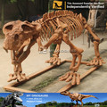 My Dino-V real dinosaur skeleton models of dinosaur skeleton fossil