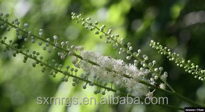 High-quality Black Cohosh Extract - Triterpene glycosides > 2.5% by HPLC (100% natural plant extract)