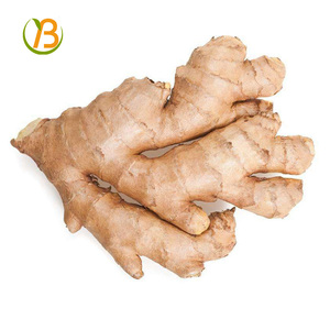Market price for ginger/ chinese good farmer