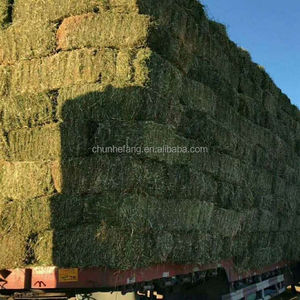 Alfalfa Hay for animal feeding