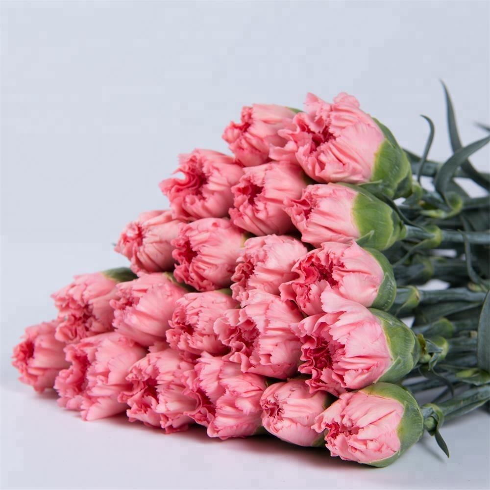 China Dounan Wholesale Fresh Cut Flowers Single Carnations For