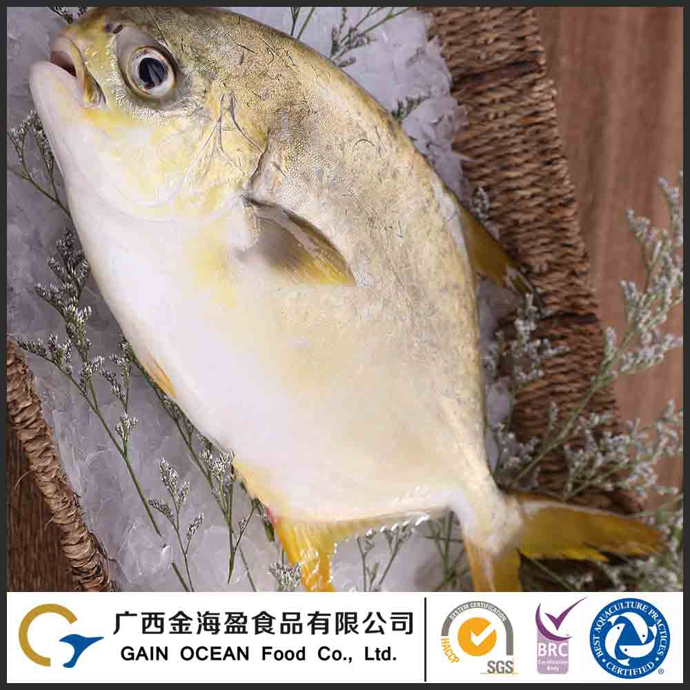 Hot selling high quality frozen seafood fish for sale