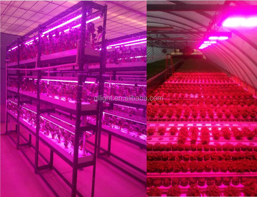 Silent Led Grow Light 300w Hydroponics Grow Kit For Greenhouse ...