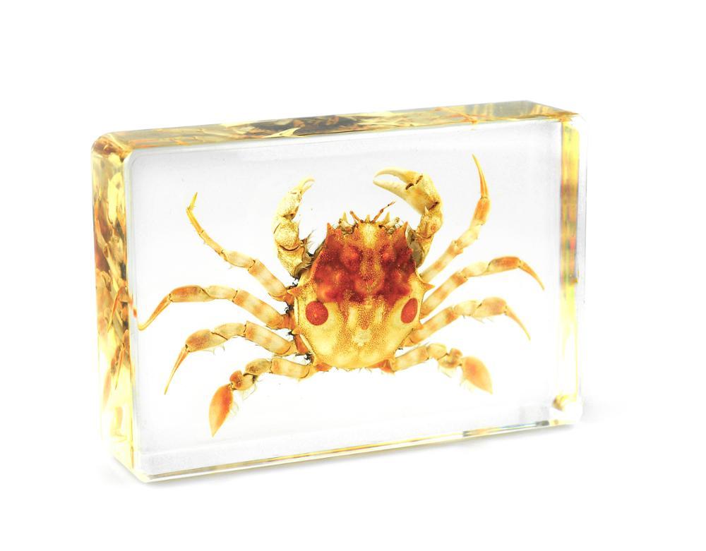 Encuentre el mejor fabricante de cangrejo artificial y cangrejo ...