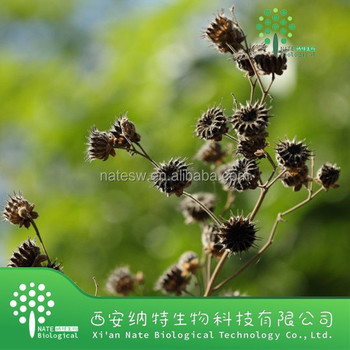 100% Natural High Quality Malva Verticillata Extract/Chingma Abutilon Seed Extract