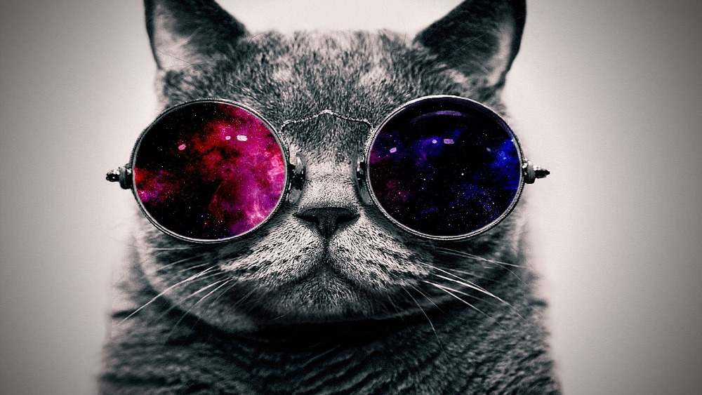 Modern cool cat wear glasses wall painting print on canvas for home decor oil painting arts No frame