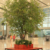 Eco-Friendly Decorative Ficus Tree Customised Fake Banyan Trees