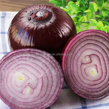 Red Onion From China