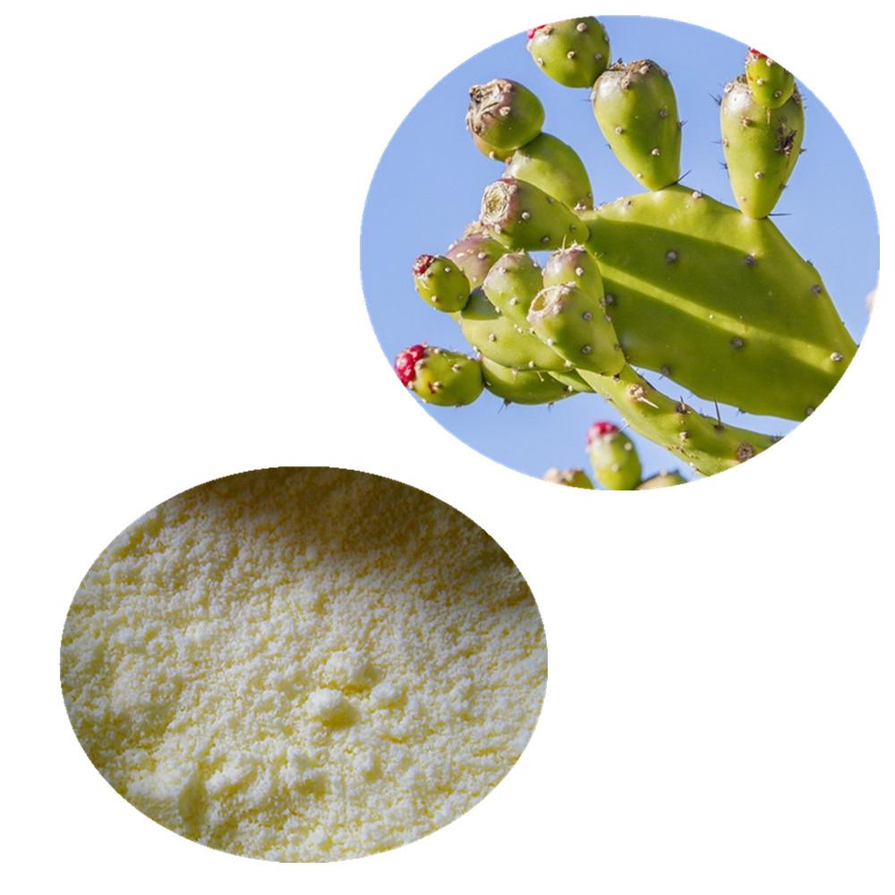 Good Quality Dried Natural Nopal Cactus Powder - Buy Cactus Powder,Nopal  Cactus Powder,Natural Nopal Cactus Powder Product on Alibaba com