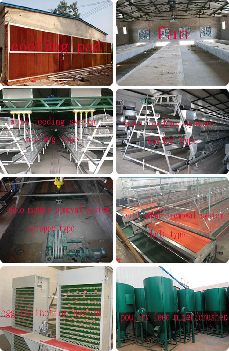 Antirust chicken egg layer cage galvanized weld wire laying hen cages high quality poultry cage for sale