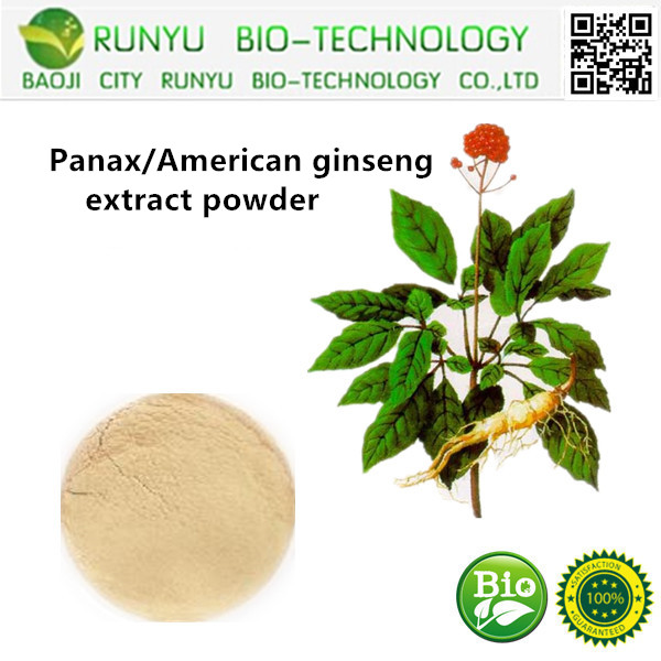Panax/American ginseng extract powder