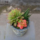 Succulent Plants Small Artificial Plants Artificial Small Echeveria And Agave Succulent Plants Set