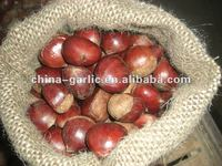 2012 New Season Fresh Chestnut (40-60pcs/kg)