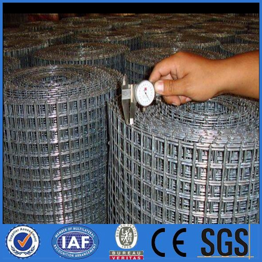 bird cage wire mesh galvanized welded wire mesh professional factory