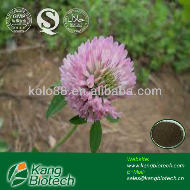 Red Clover Extract 40%Trifolium pratense p.e,red clover extraction/p.e