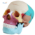 Human Science Plastic Life-Size Colorful Skull model