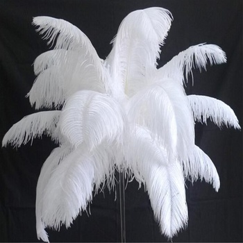 Custom dyed Very large White ostrich feathers with different sizes