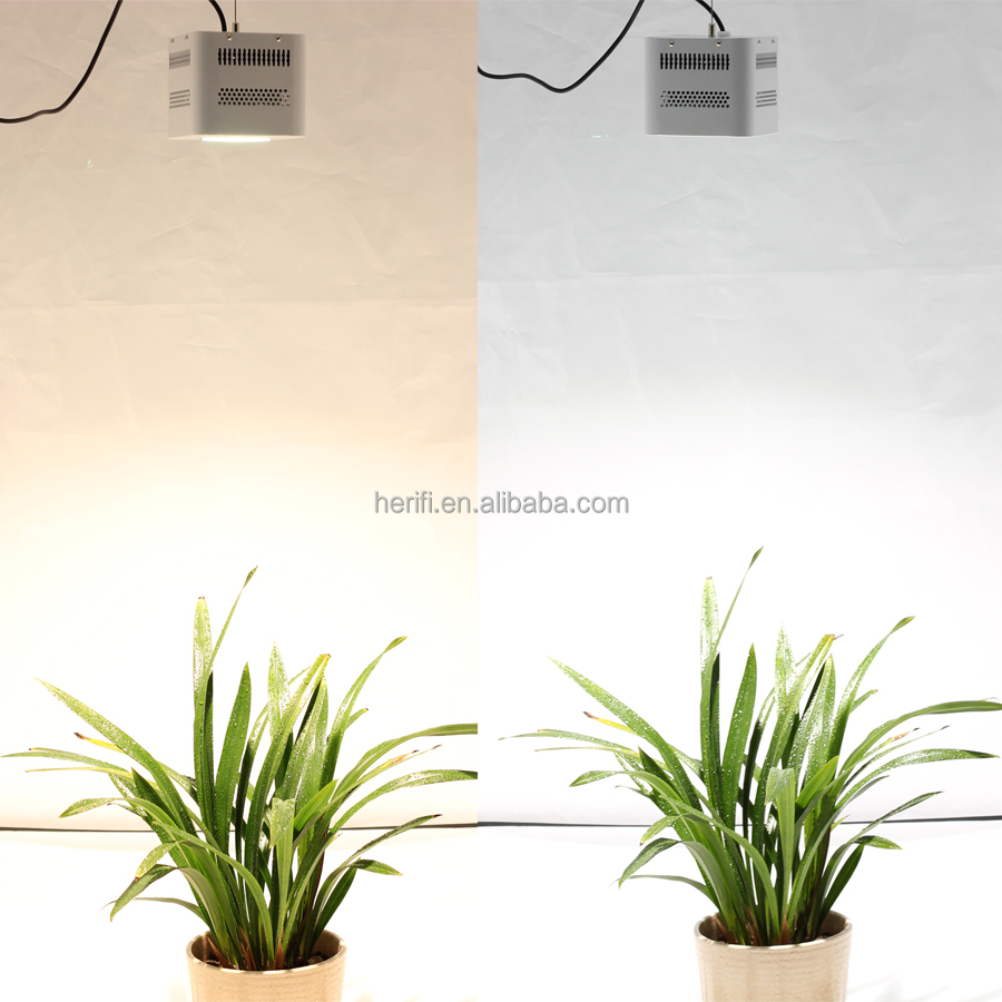 100W CXB3590 3500K LED grow lights for Vegetables and Herb Plants 100w plant seeds bulbs flowers Grow lighting