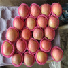 new bulk good farmer red fuji apple with high quality