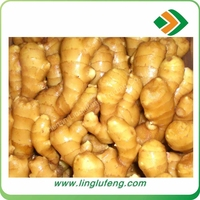 chinese ginger mesh pack