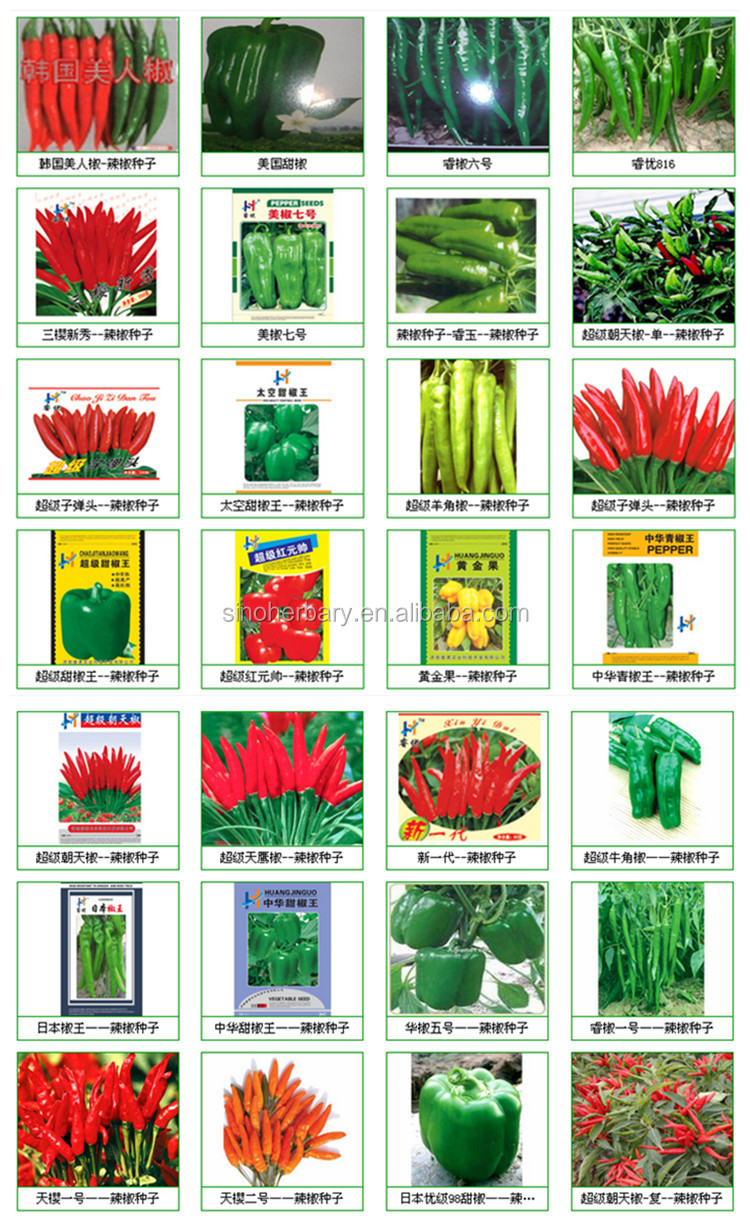 All Types Hot Pepper Seeds,Chili Pepper Seeds,Hot Chili