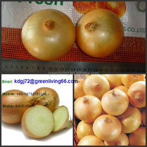 New crop holland onion 5-7cm supplier