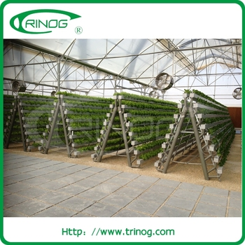 Agricultural Greenhouses Lettuce Hydroponic For Sale Buy